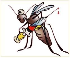 Avviso intervento di disinfestazione contro la zanzara tigre 31 agosto - 1 settembre